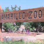 Amarillo has a Zoo